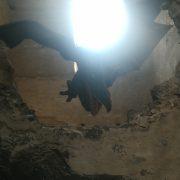 Kunětický drak hlídá hrad